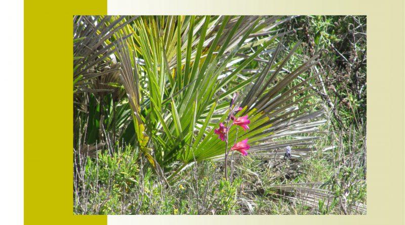 cartell_reforestacio